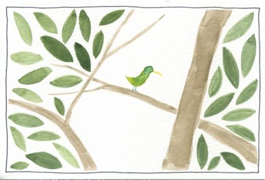 panama special bird in soberania natl park