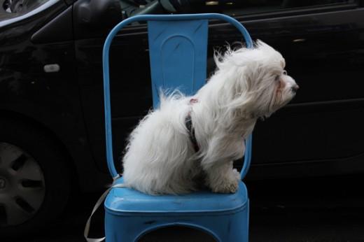 windswept paris dog