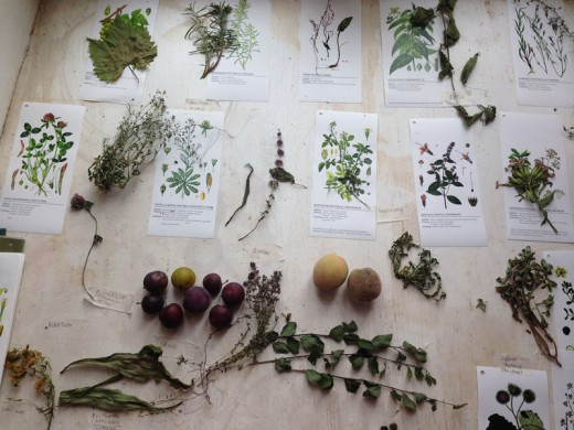 pretavoyager-boisbuchet-survivalfood-plants